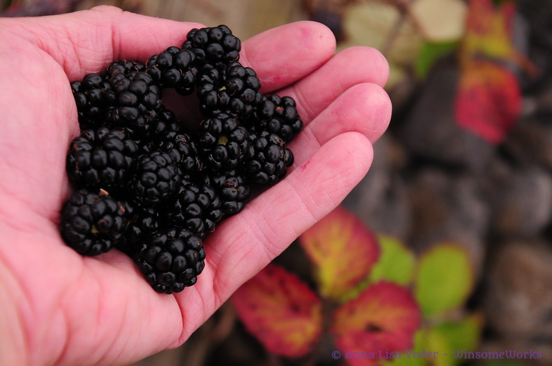 Blackberries we picked along the rail trail in Athlone