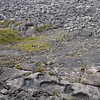 VIDEO - The Burren on Inis Oirr (one of the Aran Isles) , with close-ups of  grikes & clints  (105 Secs.)