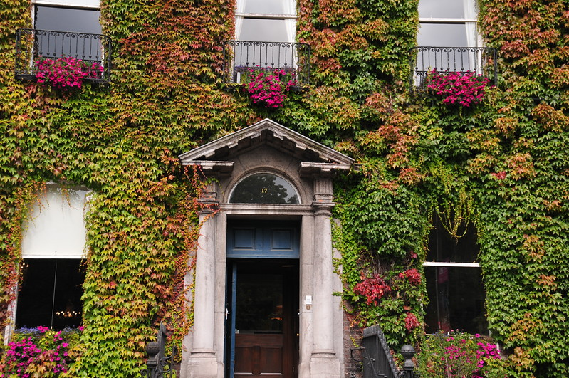 """Ivy on the """"Little Dublin Museum"""""""