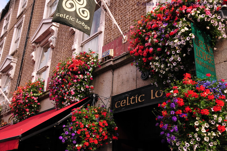 Hanging flowers at Celtic Lodge