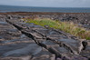 Looking towards the Atlantic over grikes & clints in stones of the burren on Northwest side of Inis Oirr