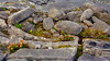 Grikes & clints in stones of the burren on Northwest side of Inis Oirr