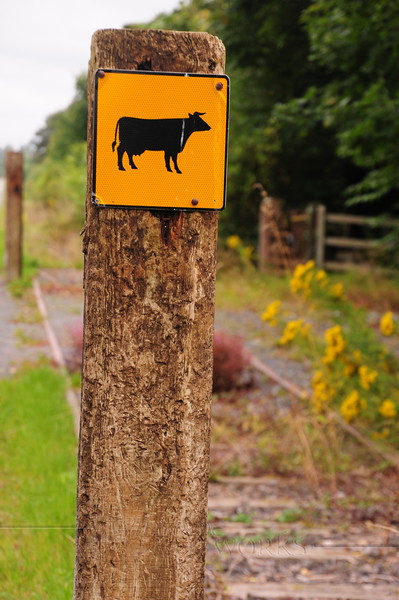 Cattle Crossing sign by rail trail near Athlone