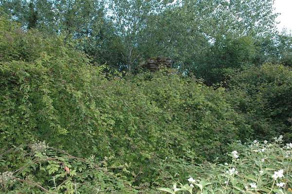 There is a house in this photo.  Can you see it?  It has been overgrown but used to be beautiful, so Maura tells us.  She remembers wanting to one day buy the house.