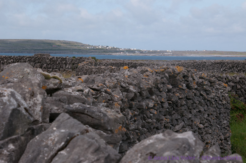 Stone walls criss-crossing Inis OIrr, with view to Atlantic