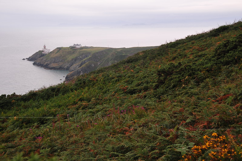 Baily Lighthouse, with bracken & gorse in foreground