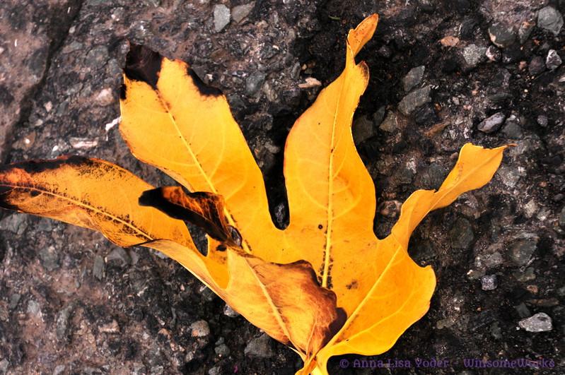 Leaf turning yellow  (needs ID)