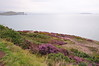 View of Balscadden Bay, Ireland's Eye & Lambay from the Cliff Path - Howth