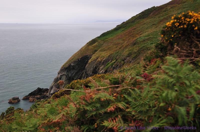Gorse & bracken on cliffs at Howth Head, on Irish Sea