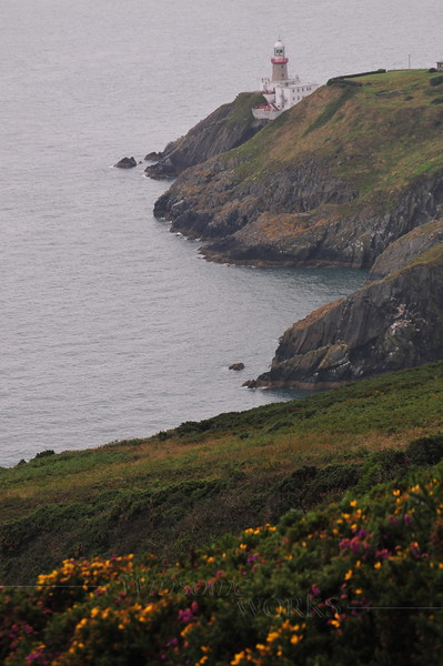 Baily Lighthouse, with gorse & heather in foreground