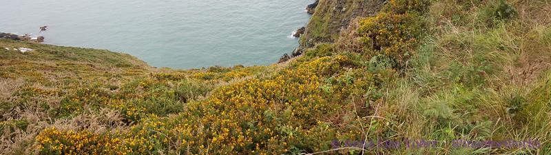 Pano along Cliff Path, looking down at Balscadden Bay