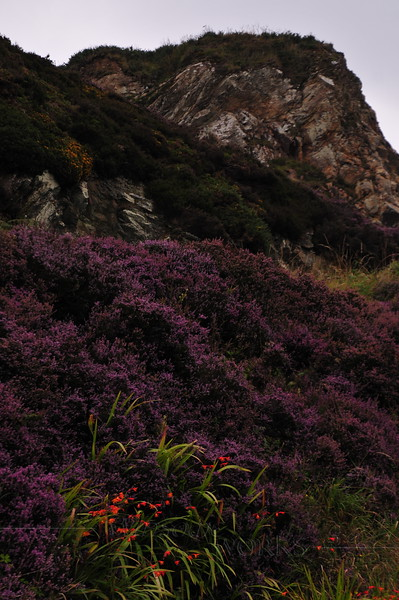Stones & heather along Cliff Path - Howth Head