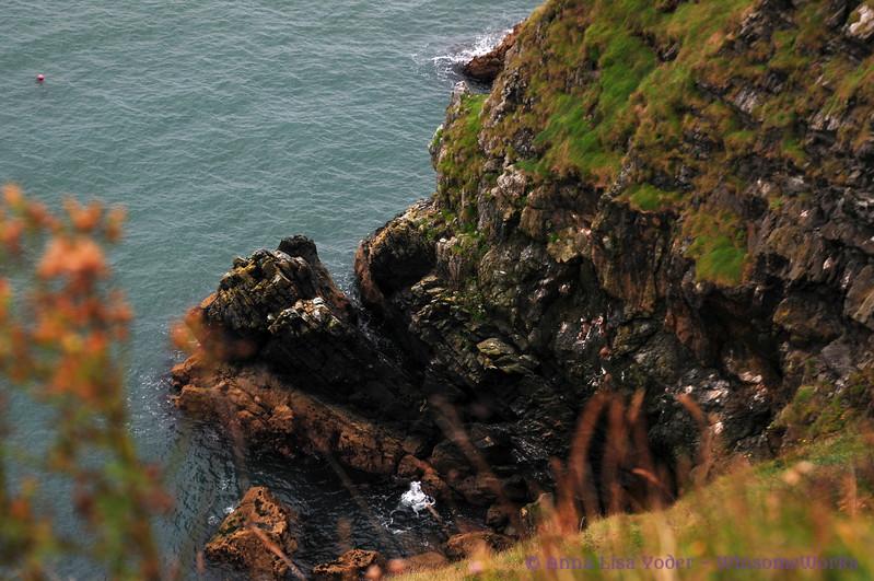 Cliffs along above Balscadden Bay, seen from Cliff Path on Howth