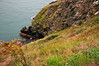 Cliffs & sea - Cliff Path, Howth