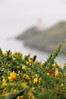 Gorse along the Cliff Path on Howth; Irish Sea in background