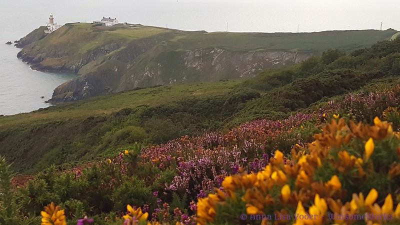 Baily Lighthouse, heather & gorse seen from Cliff Path