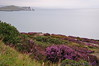 View of Balscadden Bay, & Ireland's Eye from the Cliff Path