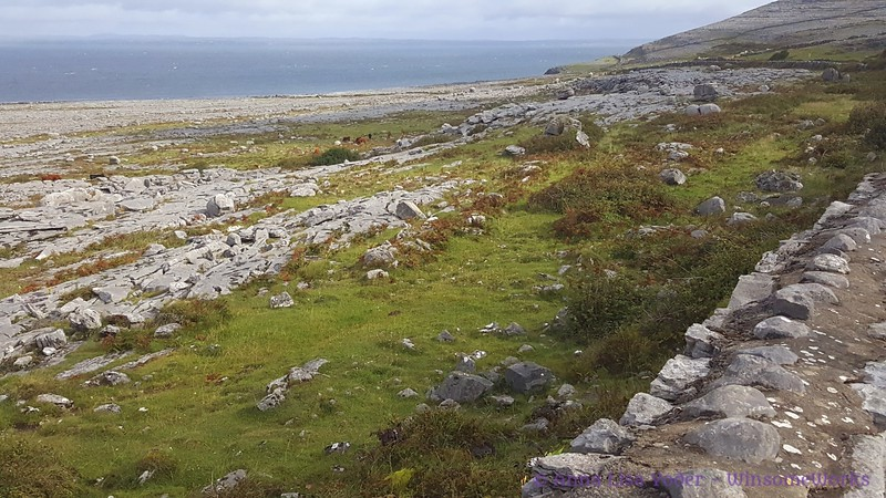 The Burren, looking out over Galway Bay near Fanore (along Rt. 477)