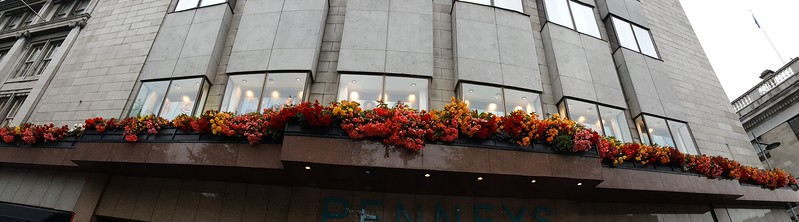 Ever-present window boxes in Dublin