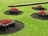 Turlough Park Gardens, Ireland