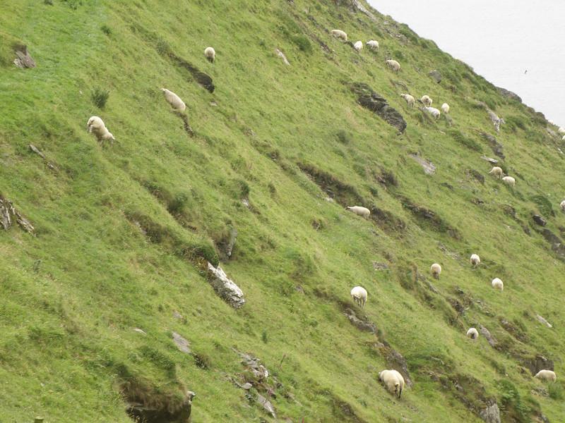 Steep slope & sheep.