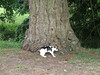 The cat at Blarney Castle, using a tree as a scratching post.