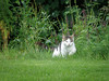 The cat at Blarney Castle