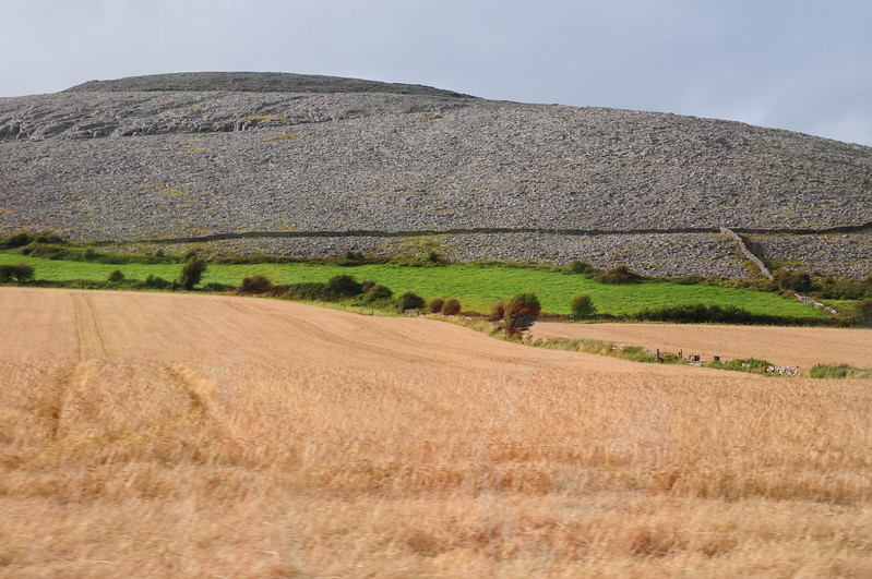 Field of grain in The Burren area