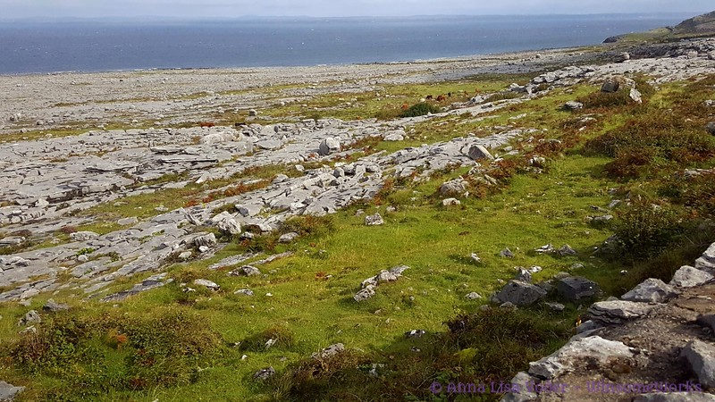The Burren with Galway Bay in background (en route to Doolin)
