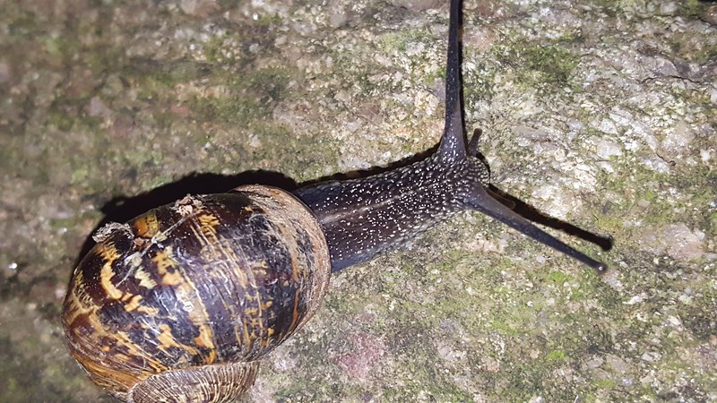 Snail spotted by Xavier at night near our Air BnB outside of Dublin