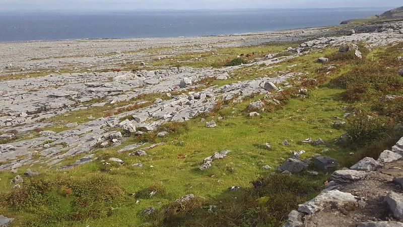The Burren, along Galway Bay