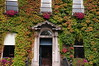 Little Dublin Museum covered in Ivy