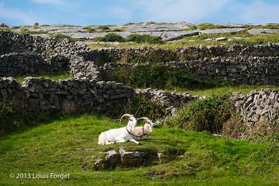 Aran Island, Co. Galway