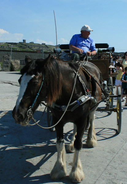 """We took a horse drawn carriage tour around a small island in Galway Bay called """"Inisheer"""". This is our guide horse Matilda- so cute."""