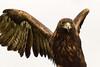 Golden Eagle, Adare, Ireland