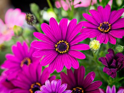 Flower at the Powerscourt Garden Center