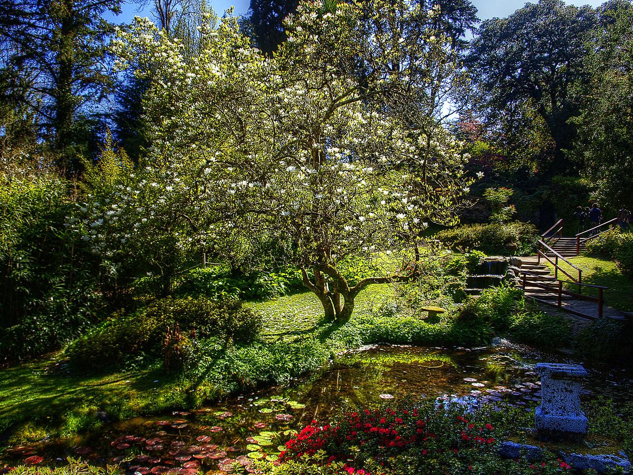 Japanese Garden at Powercourt Estate