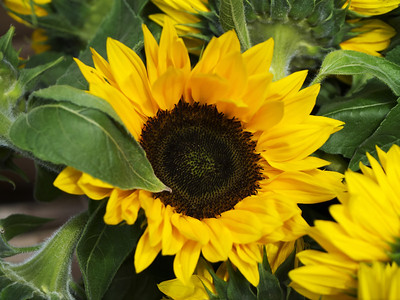 Grafton Street Sunflower, Dublin
