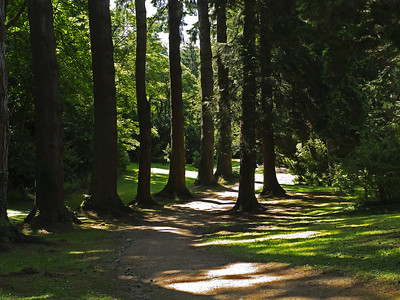 Aisle of Pines, Gardens of Powerscourt, County Wicklow