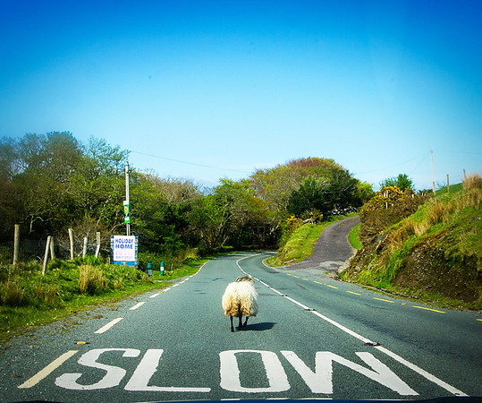 Slow Sheep