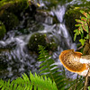 Tree Mushroom 2