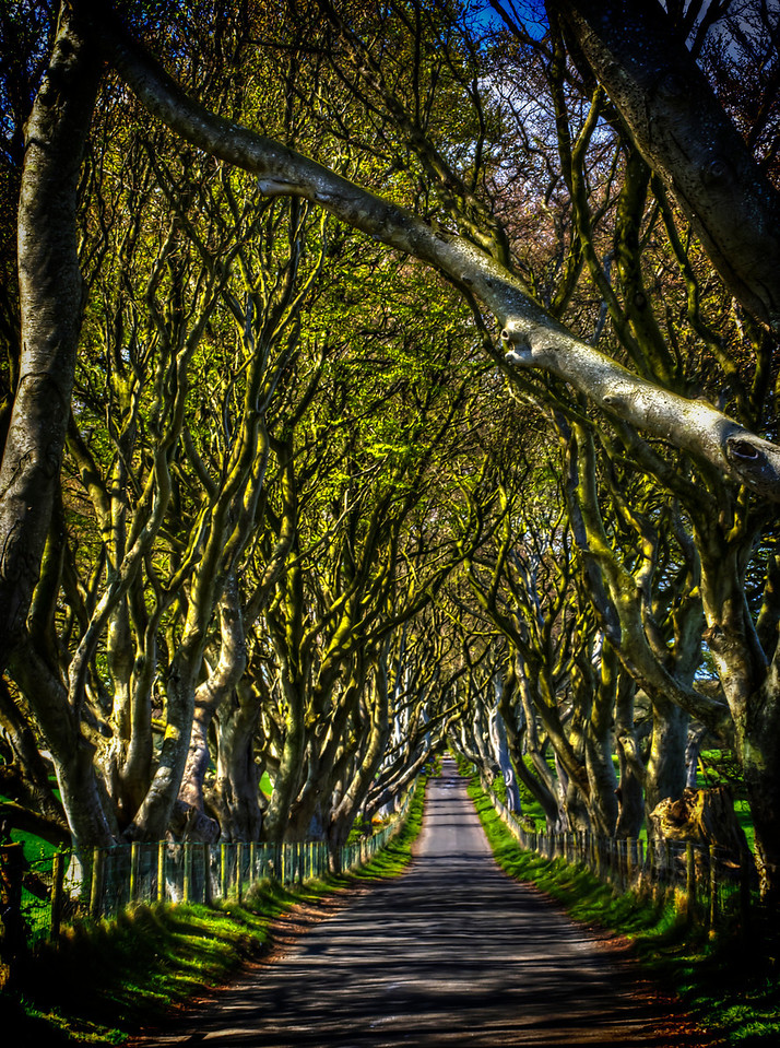 The Dark Hedges - Northern Ireland
