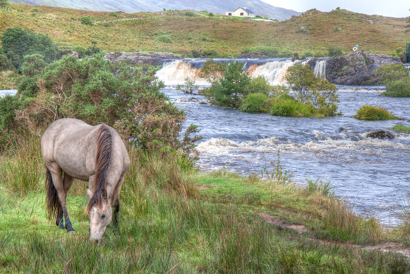 Horse at Aasleagh Falls, Co. Mayo