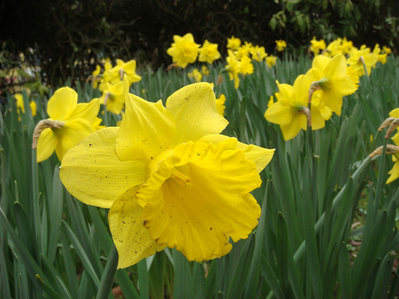 Flowers in St. Stephen's Green