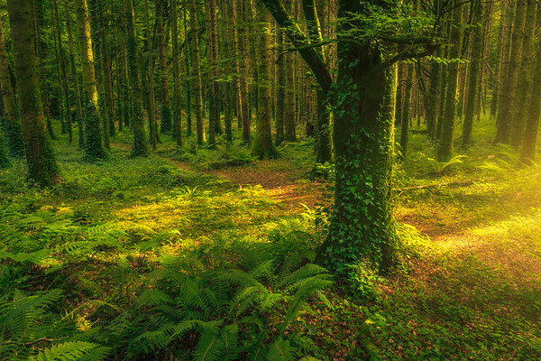 Forested Light