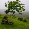 Carrowkeel Tree