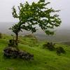 Carrowkeel Tree