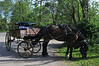 Our Jaunting Cart and horse; as they rested while we toured Ross Castle.