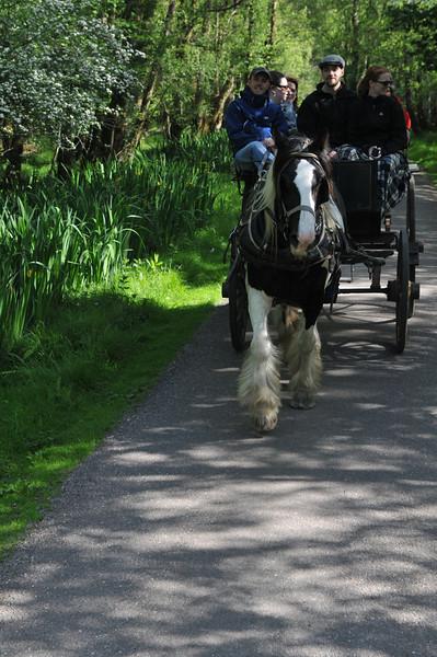 Jaunting Cart ride through Killarney National Park