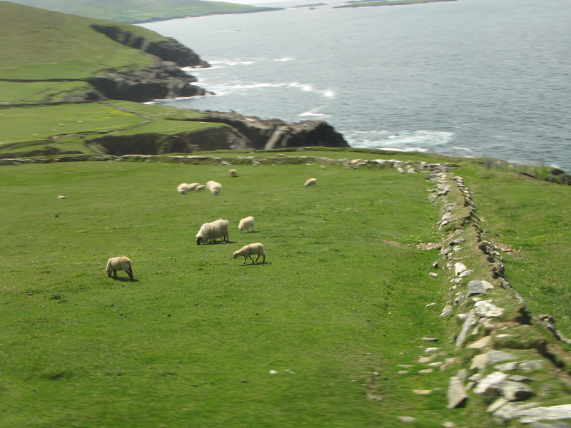 We saw lots of sheep.  If there are 2 things Ireland has in quantity, its sheep and potatoes.